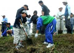 みんなで協力して水仙を植えているようす(2007年5月)