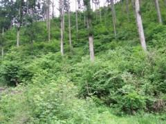 林床に光が届き、下草が生えた健全な人工林